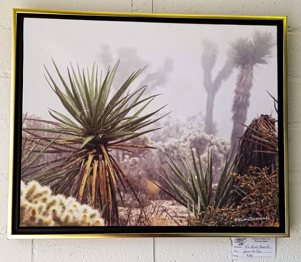 Yucca in Fog by Kim Karels Clements